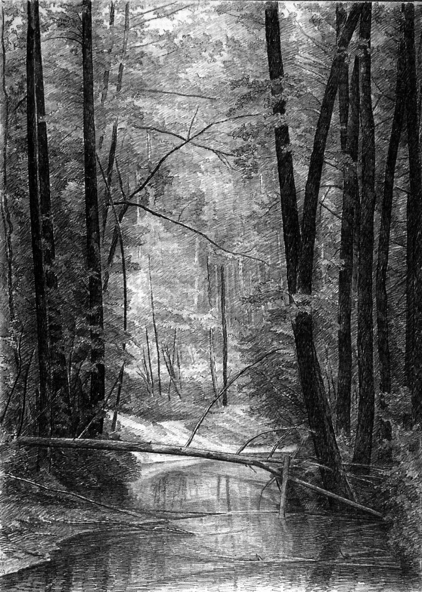 Тишина вечернего леса.